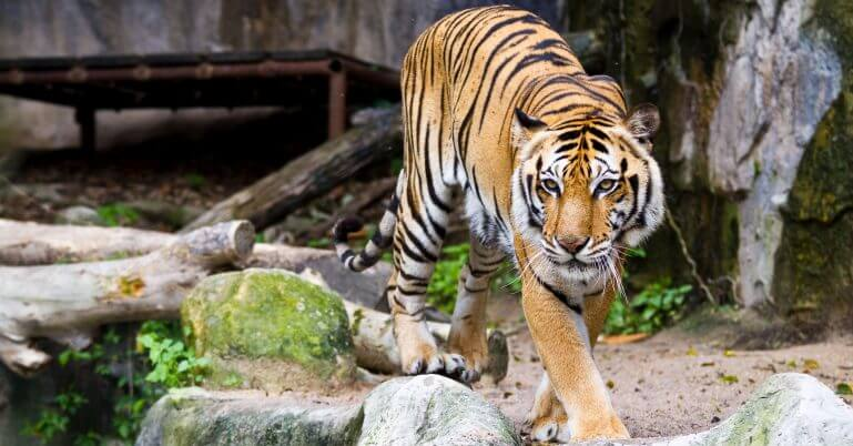 Zoo Jihlava – kam na výlet na Vysočině