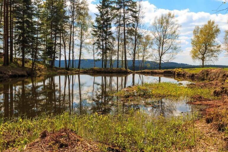Přírodní rezervace Volákův kopec | Kam na výlet na Vysočině